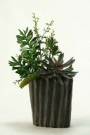 Succulents, Aloe and Dracaena Heads in Oval Cermaic Planter