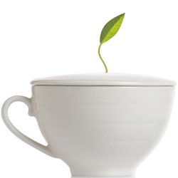 Tea Forté Covered Cafe Cup Bone White